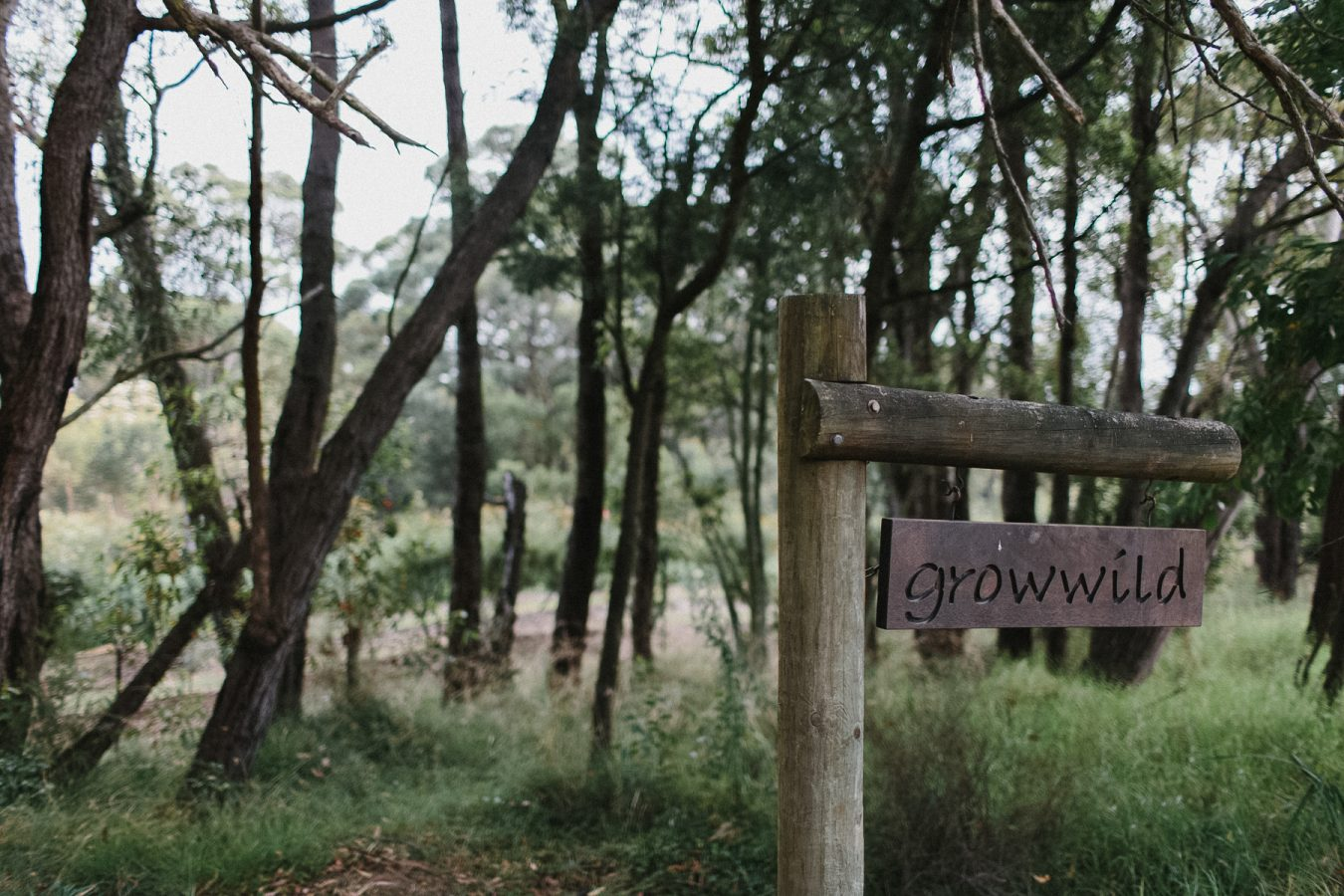 Courtney-Josh-Growwild-Bowral-southernhighlans-Wedding-21