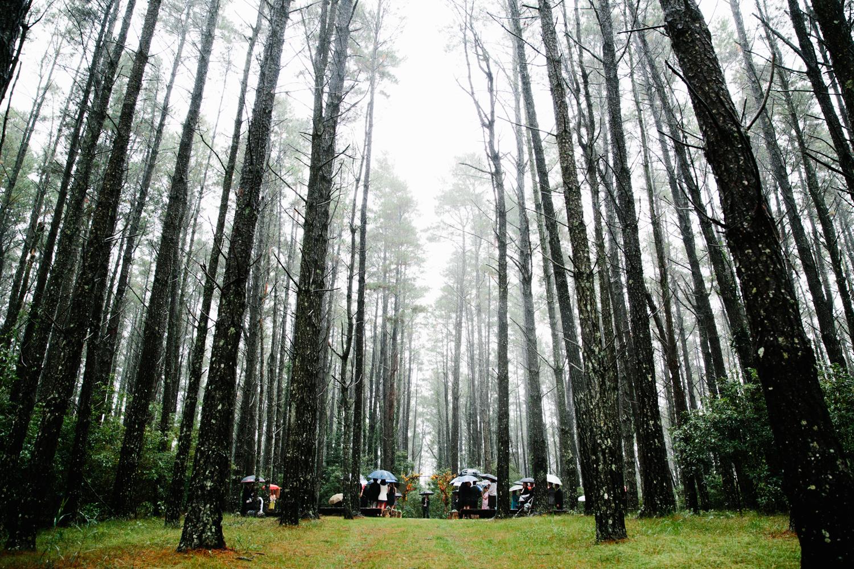 Lindsay-Nick-bilpin-pine-forrest-nsw-wedding-82