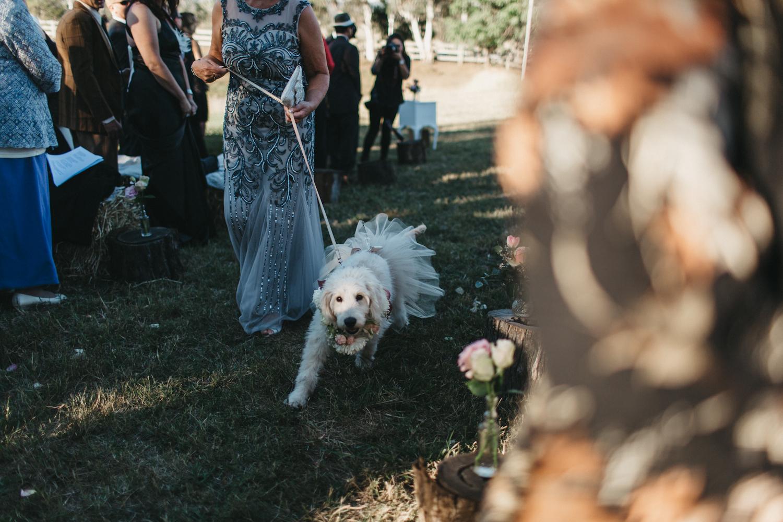 Lyndal-luke-camden-farm-burnham-grove-wedding-79